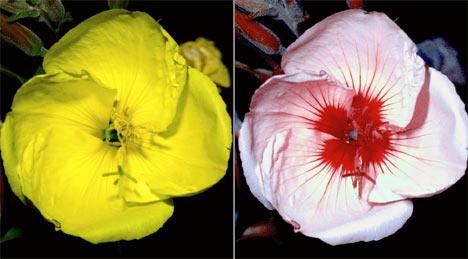 Bee Versus Human Vision